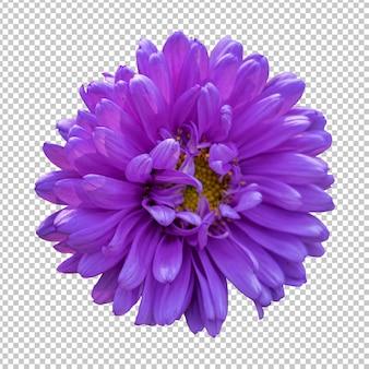 紫菊の花の分離レンダリング