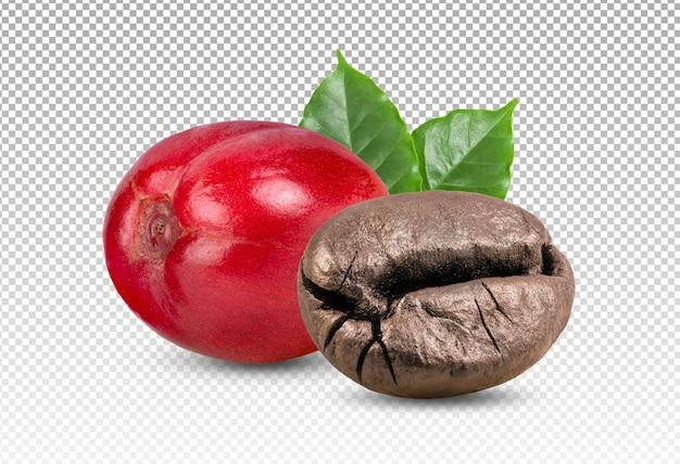 Raw and rosted coffee beans with leaves isolated