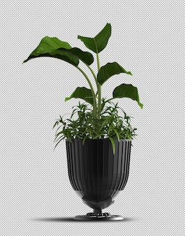 Realistic 3d render of potted plant isolated