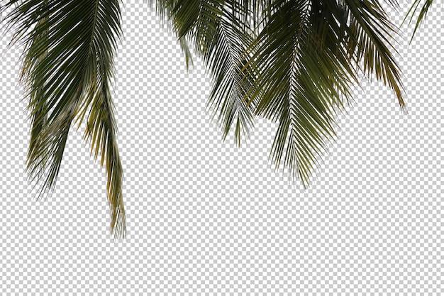 현실적인 코코넛 야자수 전경