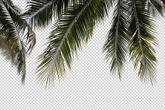 Realistic coconut palm tree foreground