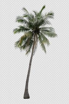 고립 된 현실적인 코코넛 야자수