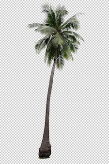 Realistic coconut palm tree isolated
