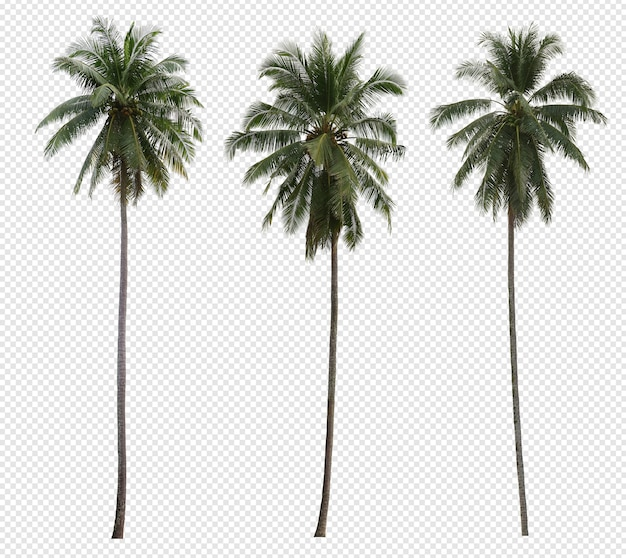 Realistic coconut palm tree set isolated