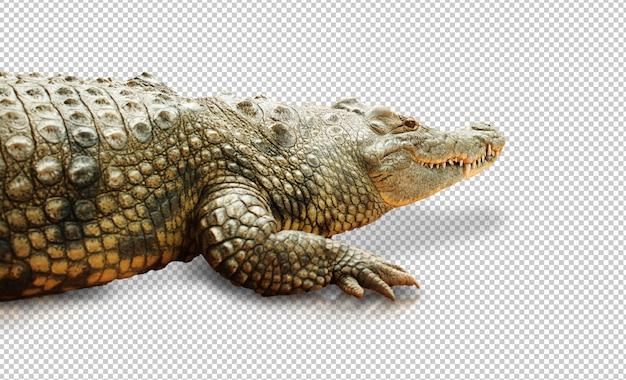 Реалистичный крокодил