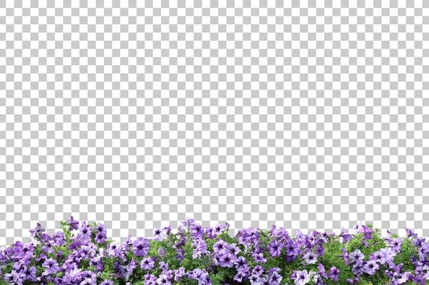 Реалистичные цветущие растения на переднем плане изолированные