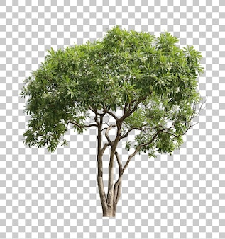 Realistic green tree foreground isolated