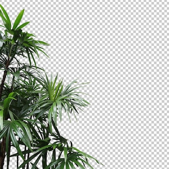 Realistic lady palm foreground isolated