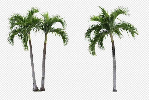 Realistic manila palm tree set isolated