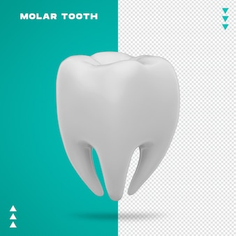 Realistic molar tooth
