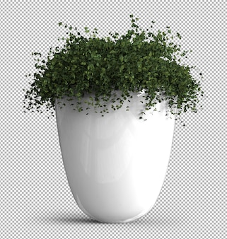 Render of isolated plant.  isometric front view. . 3d.