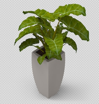 Render of isolated plant.  isometric front view. 3d.