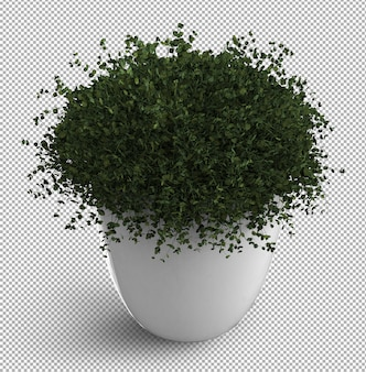 Render of isolated plant.  isometric view. . 3d.