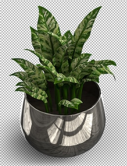 Render of isolated plant. isometric view on transparent.