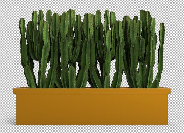 孤立した植物のレンダリング。カクタス。等尺性のフロントビュー。透明な背景。プレミアム3d。