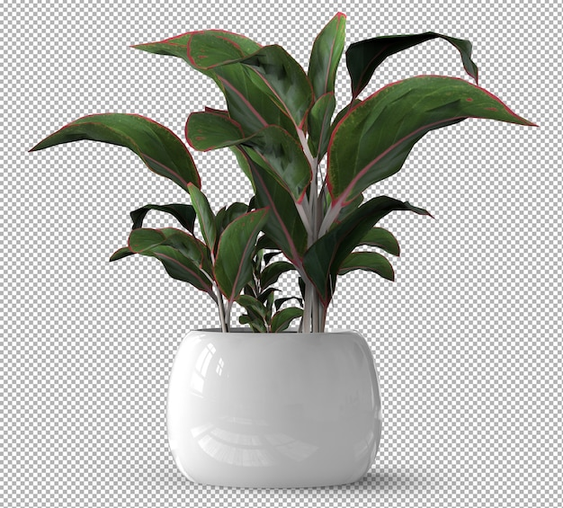 Визуализация изолированного растения. керамический горшок. изометрические вид спереди. прозрачный фон. премиум 3d.