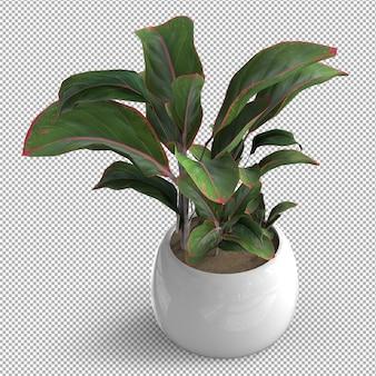 孤立した植物のレンダリング。セラミックポット。等角投影図。透明な背景。プレミアム3d。