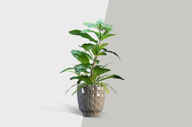 分離されたポットでの分離された植物のレンダリング