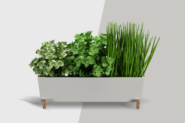 냄비에 고립 된 식물의 렌더링