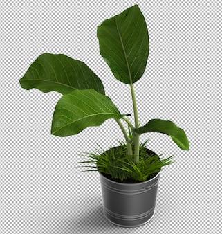 孤立した植物のレンダリング。等尺性のフロントビュー。 3d。