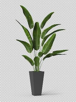 孤立した植物のレンダリング。等尺性フロントビュー。透明な壁。プレミアム3d。