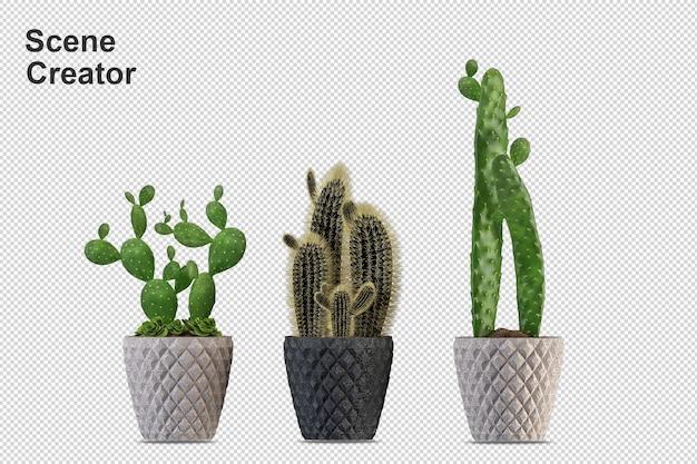 Визуализация изолированного растения. изометрический вид спереди. прозрачная стена