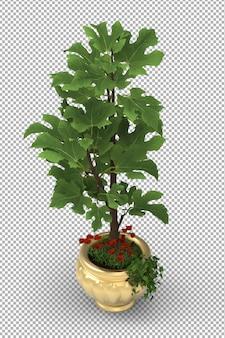 孤立した植物のレンダリング。鉢植え。等尺性のフロントビュー。 3d。シーンクリエーター。