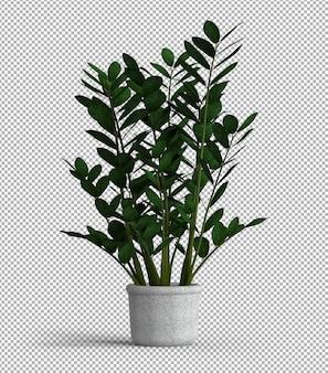 アイソメトリックビューで孤立した植物のレンダリング