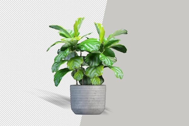 Визуализация изолированного растения