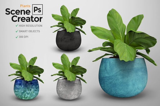 고립 된 식물 3d의 렌더링. 장면 제작자. 화분에 심은 식물. 다른 디자인. 장면 제작자.