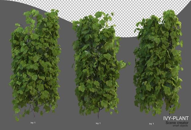 Rendering of ivy arrangement variety of styles