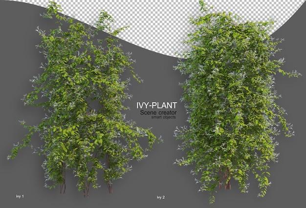 Rendering of ivy arrangement variety of styles Premium Psd