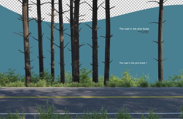 소나무 숲에도