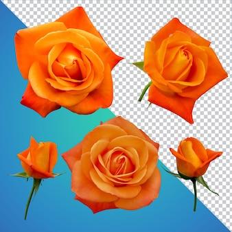 Розы цветок