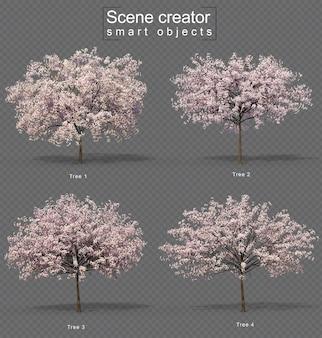 Set of  cherry tree