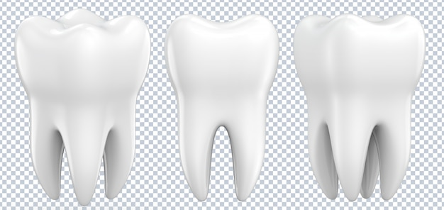 Set of dental premolar teeth