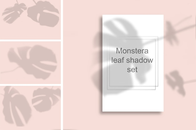 A set of monstera leaf shadows on a pink wall. black and white summer for photo overlay or layout.