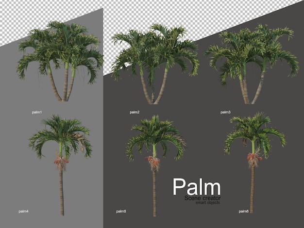 Set of palm tree arrangements