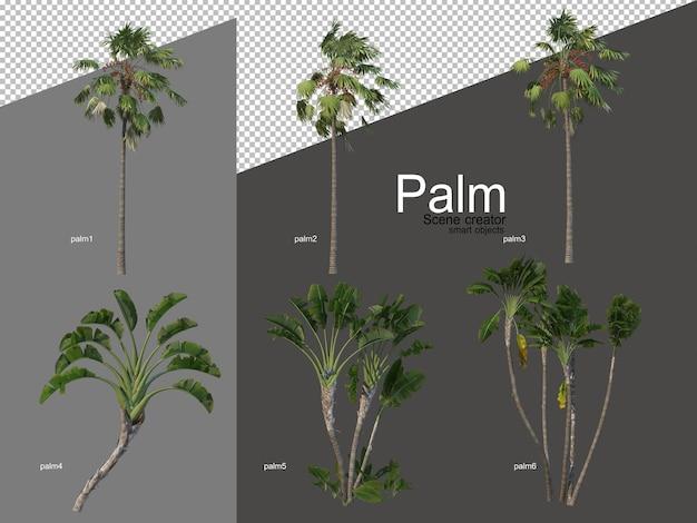 Set of palm tree arrangements