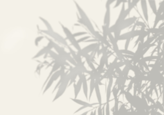 The shadow of an exotic plant on a white wall