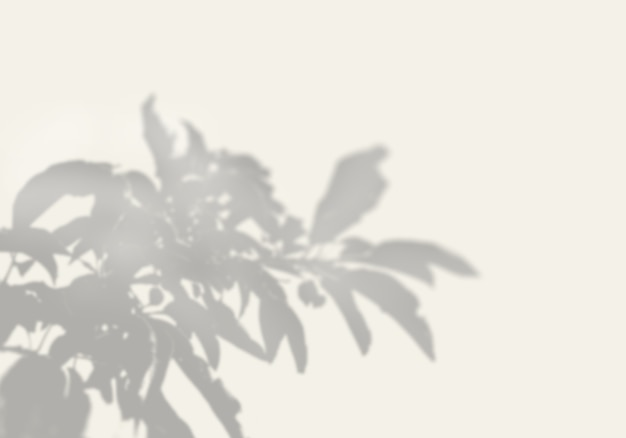 The shadow of an exotic plant on a white wall.