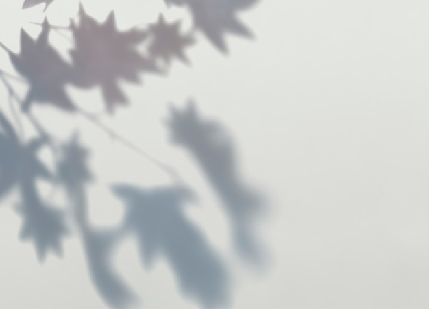 Shadow of maple leaves on a wall