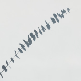 흰 벽에 유칼립투스의 그림자