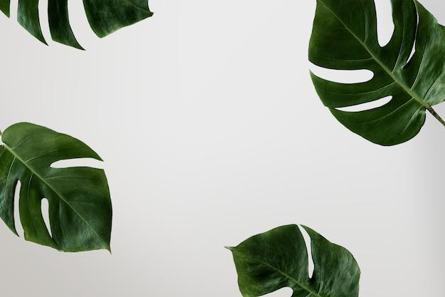 손바닥의 그림자는 벽에 나뭇잎