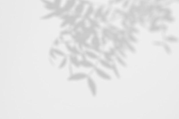 벽에 열 대 잎의 그림자