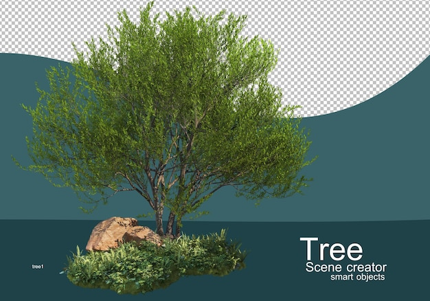 Showing results for tree and shrub arrangements