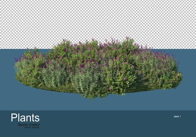 多くの植物がある小さな庭