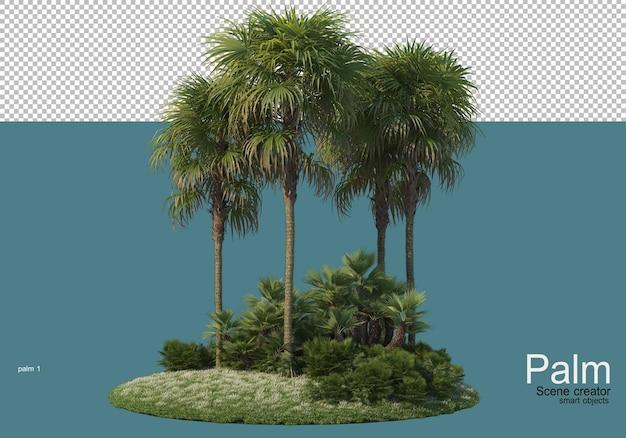 Small palm plantation