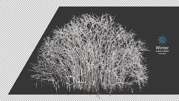 乾いた木の枝のクリッピングパスに覆われた雪