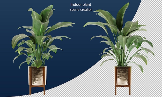 냄비에 strelitzia nicolai 냄비에 실내 식물 냄비에 장식 식물 냄비에